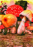 Fantasy Meadow with mushrooms stock photos
