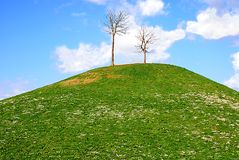 Meadow with copy space. Lonley tree on the top of a hill Royalty Free Stock Photo