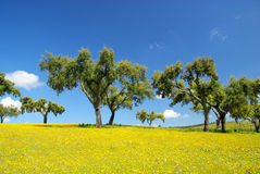 Meadow and cork oaks Royalty Free Stock Photography