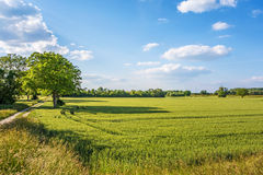 Meadow and corn field, rural landscape Stock Photos