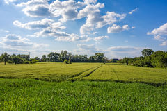 Meadow and corn field, rural landscape Stock Photo