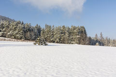 Meadow covered with snow Royalty Free Stock Image