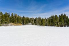 Meadow covered in untouched snow on the trail to San Jacinto mountain peak, San Jacinto State Park, California royalty free stock photography