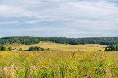 Meadow covered with wild flowers and weed with forest and a field on the background Stock Image