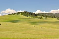 Meadow and cow Stock Photography