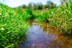 Meadow creek with green grass Royalty Free Stock Photography