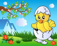 Meadow with cute chicken in egg. Illustration Stock Photos