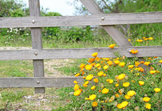 Meadow daisies and gate Royalty Free Stock Images