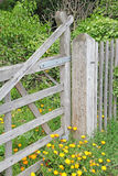 Meadow daisies and gate Stock Image