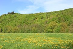 Spring scenery Royalty Free Stock Photo