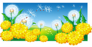 Meadow with dandelions Royalty Free Stock Photos