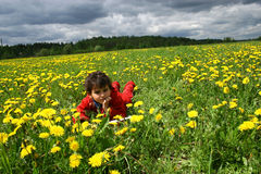 Meadow and dandelions. Spring day. Game on a meadow with dandelions Stock Image