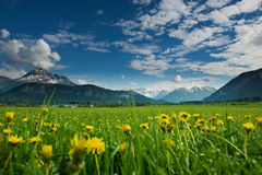 Meadow with dandelions and mountains Stock Images