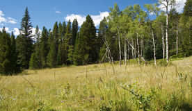 Meadow, Dark Forest and Bright Blue Sky Stock Photos