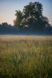 Meadow at dawn with mist Royalty Free Stock Photos