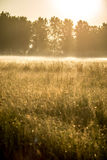 Meadow at dawn with mist Royalty Free Stock Image