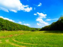 Meadow and deciduous forest Stock Photo