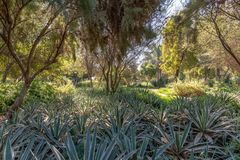 A meadow of desert plants, Abu Dhabi stock photo
