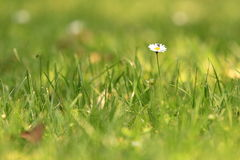 Meadow detail Royalty Free Stock Photos
