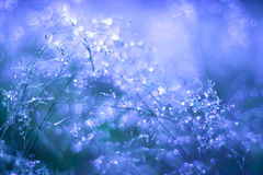 Meadow in the dew Royalty Free Stock Image