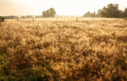 Meadow in the dew into a sunny day Royalty Free Stock Photos