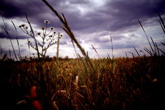 Meadow. Dimming over the summer meadow Stock Photos