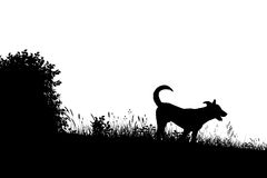 Meadow dog silhouette Stock Photo