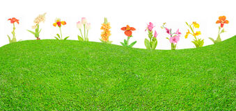 Meadow of dreams Stock Images