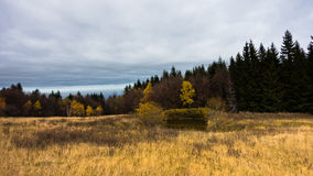 Meadow with dry yellow grass and forest in a background, autumn at mountain Bobija Royalty Free Stock Photos
