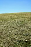 Meadow with drying hay Stock Images