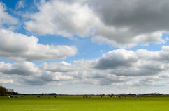Meadow with dutch sky Royalty Free Stock Images