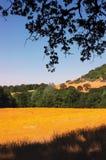 meadow dziki kwiat żółty Zdjęcia Stock