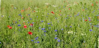 Meadow, Ecosystem, Field, Grassland stock photo