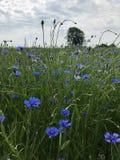 Meadow, Ecosystem, Wildflower, Flora stock photography