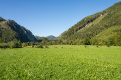 Meadow in the Ennstal, Upper Austria Stock Photography