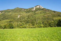 Meadow in the Ennstal, Upper Austria Royalty Free Stock Images