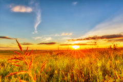 Meadow, evening sky and sunset Royalty Free Stock Image
