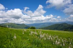 Meadow expanses with asphodels and narcissus flowers under a blue sky with clouds. royalty free stock photography