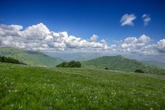 Meadow expanses with narcissus flowers under a blue sky with clouds. stock photography