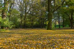 Meadow of fallen autumn leaves. Yellow and orange, in the autumn forest stock images