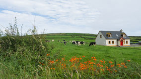 Meadow with farm animals. Meadow with cabin and farm animals Stock Photo