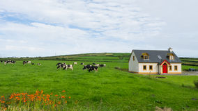 Meadow with farm animals. Meadow with cabin and farm animals Stock Photos