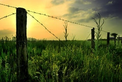 Meadow with fence Royalty Free Stock Photography