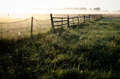 Meadow and fence at countryside. In early morning mist. A foggy landscape in the Latvia Royalty Free Stock Photo