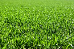 Meadow, Field, Green, Nature, Grass Stock Photo