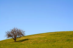 Meadow field with old tree Royalty Free Stock Photos