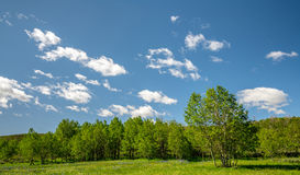 Meadow filled with flowers and trees on a cloudy day Royalty Free Stock Photography