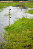 Meadow flooded Royalty Free Stock Photos
