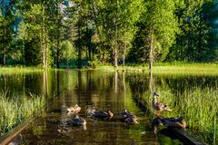 Meadow with flooded boardwalk in Yosemite. National Park Valley. California, USA Royalty Free Stock Photo