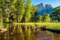 Meadow with flooded boardwalk in Yosemite. National Park Valley. California, USA Royalty Free Stock Image